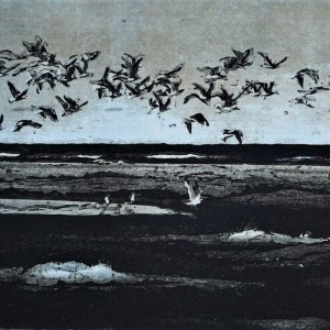 Måger Nordstrand Skagen Rammemål H37,5xL56 Pris